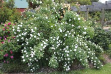 Pompom blanc Parfait
